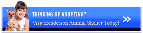 Thinking of Adopting - Visit Henderson Animal Shelter Today